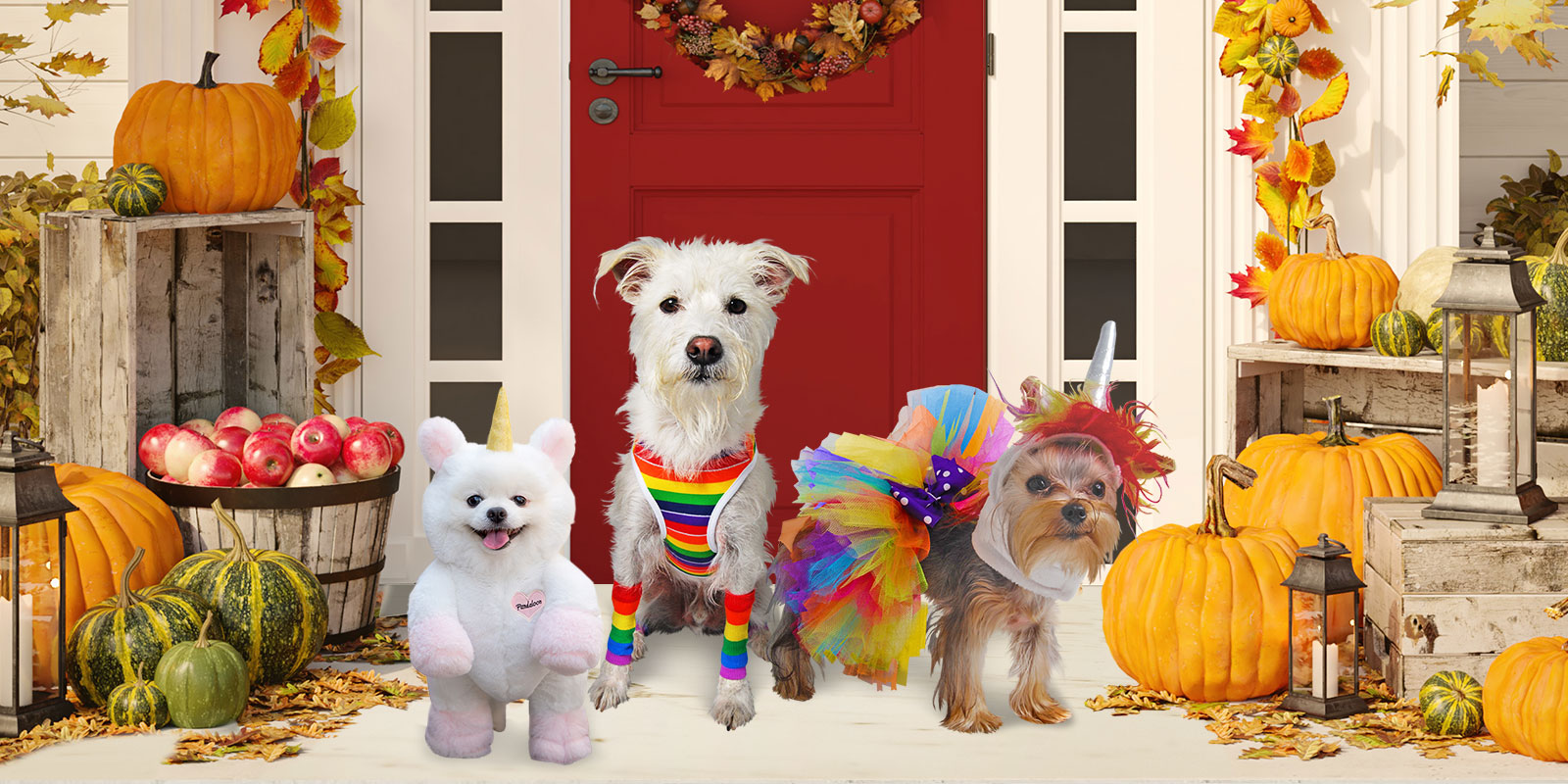 Trick or Treat Dog Costumes
